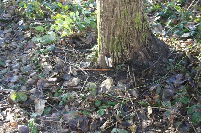 10bike tree