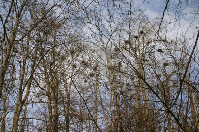 nest trees