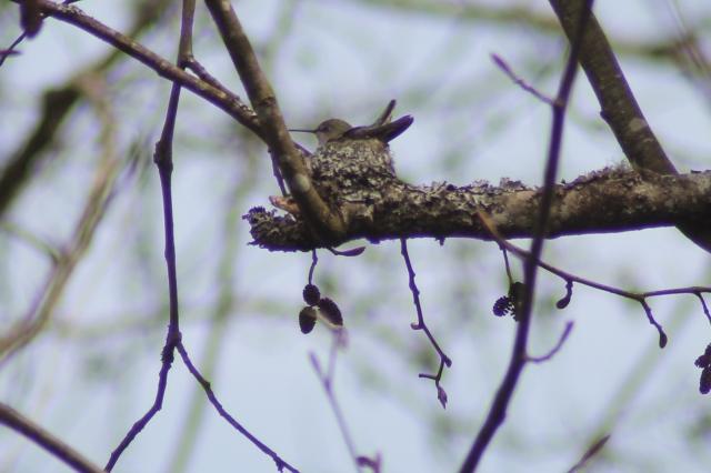 ANHU Nest