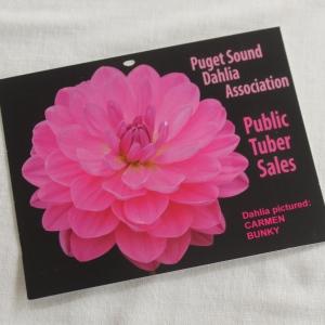 dalhia post card