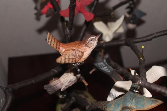wren in tree