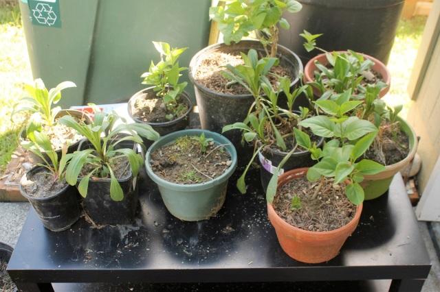 freecycled plants